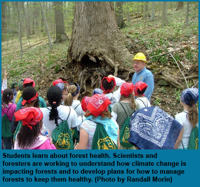 Students learn about forest health